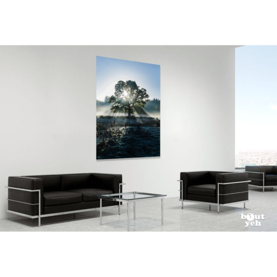 Light Scatter Tree 2, Northern Ireland. Irish landscape photograph in room setting, by Joshua Clarke.
