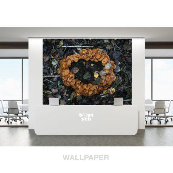 Fairy Ring 2 landscape photo photographic wallpaper.