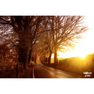 The Dark Hedges Games of Thrones location, N. Ireland - photographic print for sale. Photo, Glenda Hall.